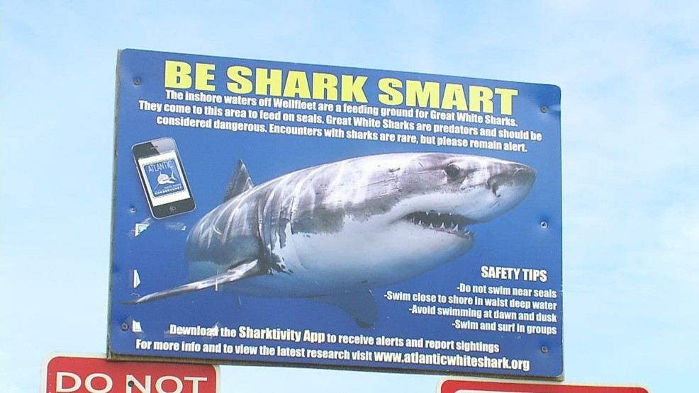 Sharks off Cape Cod lead to reroute of longtime charity swim