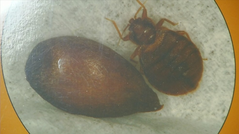 Union President Wants Providence Courthouse Closed For Treatment Of Bedbugs Wjar