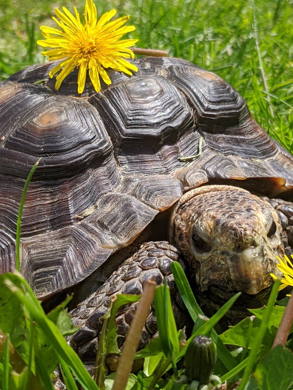53 Year Old Tortoise Needs New Home After Owner Dies Of Covid 19 Wjar