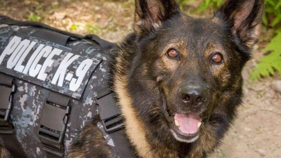 Cyst removed from K-9 Viking tests positive for cancer, dog