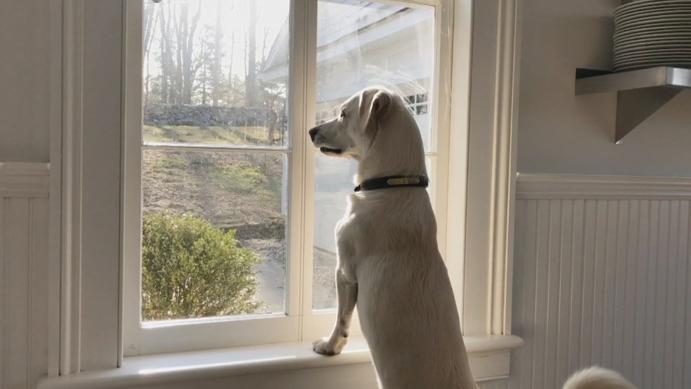 Consumer Reports Online Exclusive Clean Your Windows Like A